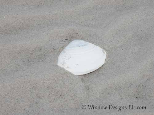 Sandy Neck large clam shell on Cape Cod. Made into shell window treatments for a Yarmouth, MA beach house. Window Designs Etc. by Marie Mouradian www.windowdesignsetc.com