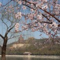 The Summer Palace and Longevity Hill in Beijing, China. Apple or cherry blossoms in the foreground.